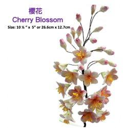 Cherry Blossom-櫻花